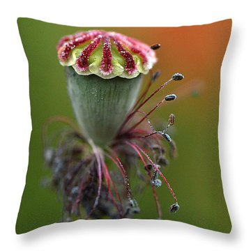 Life's Fruit Throw Pillow
