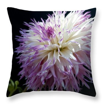 Throw Pillow featuring the photograph Light Dance by Haleh Mahbod