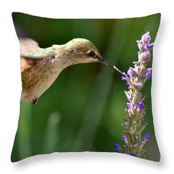 Light Filters Behind The Hummer Throw Pillow