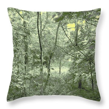 Throw Pillow featuring the photograph Light Forest Scene by Tom Wurl