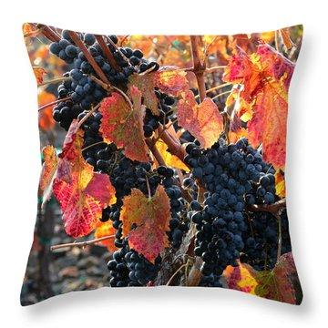 Light Through Fall Vineyard Throw Pillow by Carol Groenen