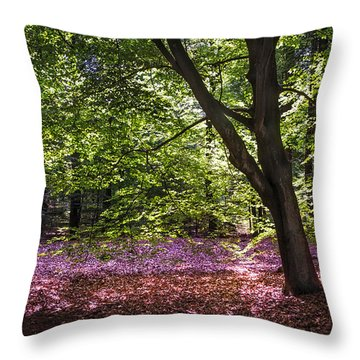 Light Tree In Hoge Veluwe National Park. Netherlands Throw Pillow by Jenny Rainbow