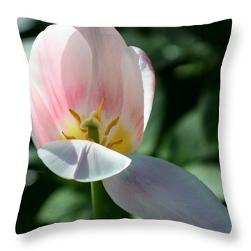 Throw Pillow featuring the photograph Light Tulip by Susanne Baumann