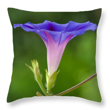 Lightened Throw Pillow