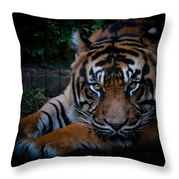 Like My Eyes? Throw Pillow