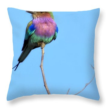 Lilac-breasted Roller I Throw Pillow