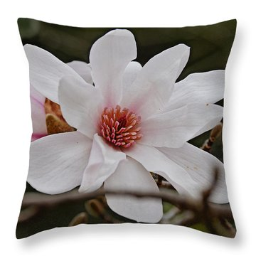 Throw Pillow featuring the photograph Liliiflora by Linda Brown