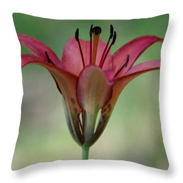 Lillium Philadelphicum Throw Pillow