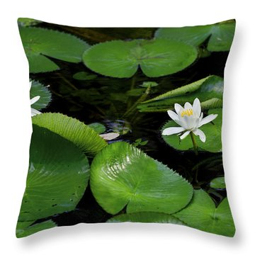 Lily Pads And Blossoms Throw Pillow by Rich Franco