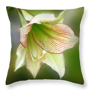 Lily Throw Pillow by Phil Penne