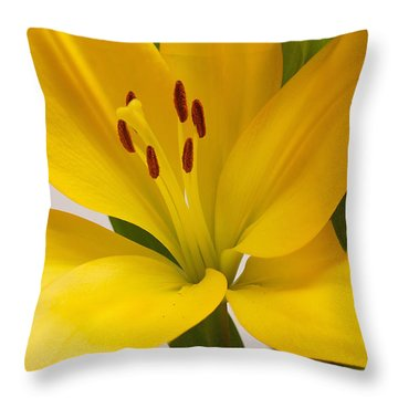 Lily Throw Pillow by Scott Carruthers