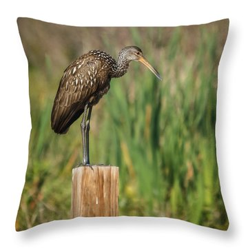 Limpkin Throw Pillow by Jane Luxton