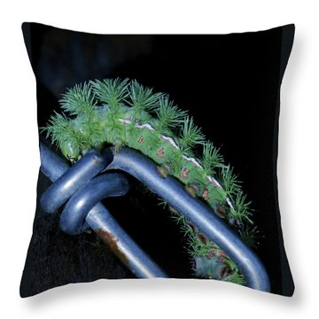 Throw Pillow featuring the photograph Link To The Future - Io Moth Caterpillar by Jane Eleanor Nicholas