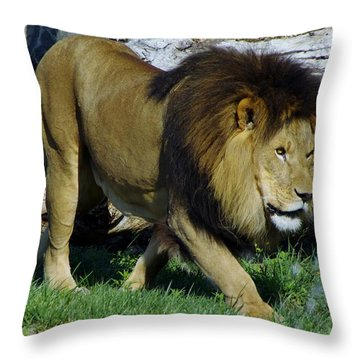 Lion 1 Throw Pillow