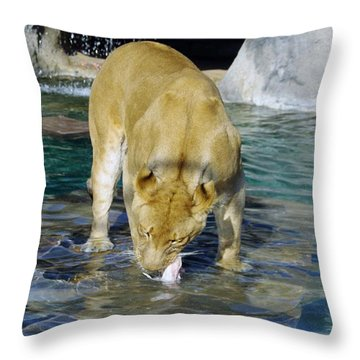 Lion 3 Throw Pillow