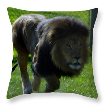Lion 4 Throw Pillow