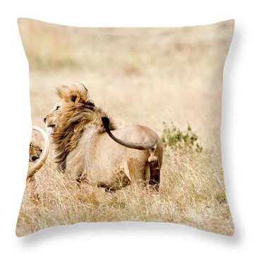 Lion And A Lioness Panthera Leo Throw Pillow