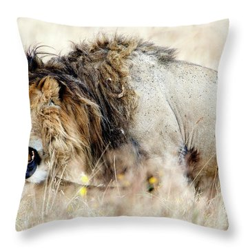 Lion And A Lioness Panthera Leo Mating Throw Pillow