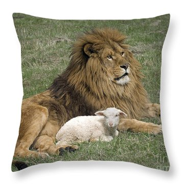 Lion And Lamb Throw Pillow by Wildlife Fine Art