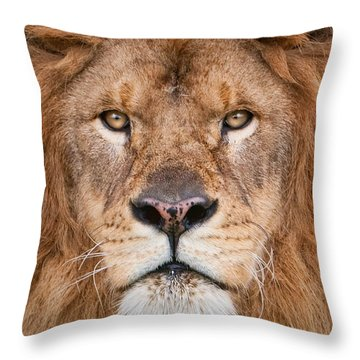 Throw Pillow featuring the photograph Lion Close Up by Jerry Fornarotto