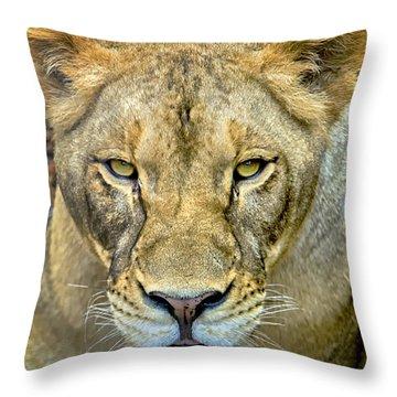Lion Closeup Throw Pillow by David Millenheft