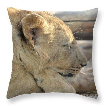 Lion Cub Dozing In The Sun Throw Pillow