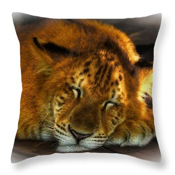 Lion Cub Throw Pillow by Kathy Baccari
