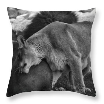 Lion Hugs In Black And White Throw Pillow by Thomas Woolworth