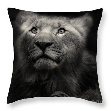 Lion In The Dark Throw Pillow