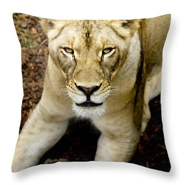 Throw Pillow featuring the photograph Lion-wildlife by David Millenheft
