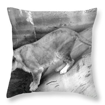 Throw Pillow featuring the photograph Lioness Black And White by Joseph Baril