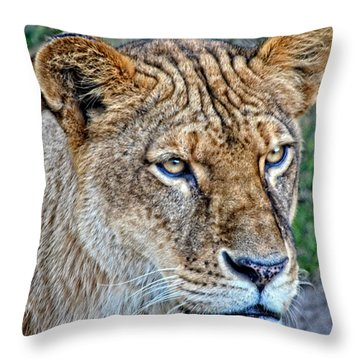 Lioness Deep In Thought Hdr Throw Pillow
