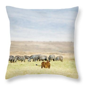 Lioness Panthera Leo Looking At A Herd Throw Pillow