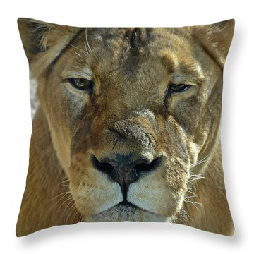 Lioness Portrait Throw Pillow