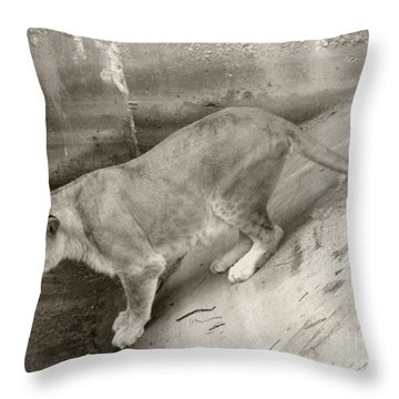 Lioness Sepia Throw Pillow