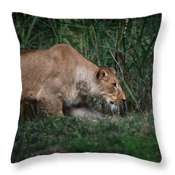 Lioness Stalking Throw Pillow by Joseph G Holland