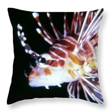 Lionfish 3 Throw Pillow by Dawn Eshelman