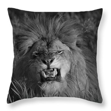 Lions Courage Throw Pillow by Wildlife Fine Art