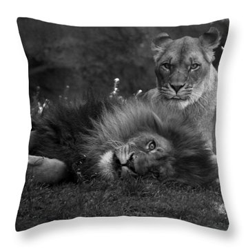 Lions Me And My Guy Throw Pillow by Thomas Woolworth
