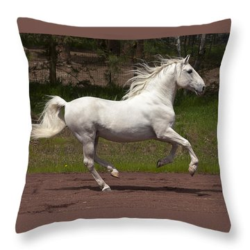 Throw Pillow featuring the photograph Lipizzan At Liberty D5809 by Wes and Dotty Weber