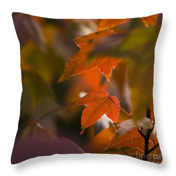 Liquidambar Autumn Throw Pillow by Anne Gilbert