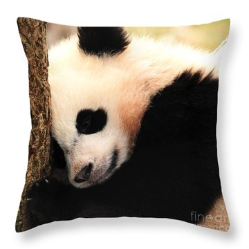Throw Pillow featuring the photograph Little Bear's Favorite Tree by Olivia Hardwicke