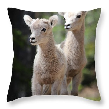 Little Bighorns Throw Pillow by Marty Fancy