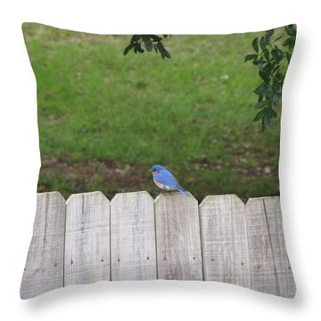 Throw Pillow featuring the photograph Little Bird by Beth Vincent