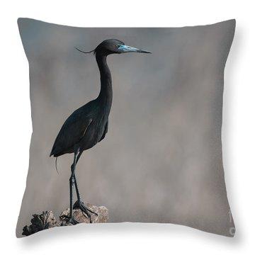 Little Blue Heron Portrait Throw Pillow by Robert Frederick