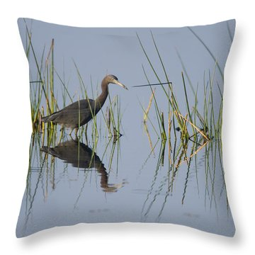 Little Blue Heron Wading Texas Throw Pillow
