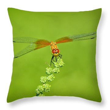 Throw Pillow featuring the photograph Little Bugger by Greg Norrell