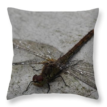Little Dragonfly Throw Pillow