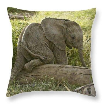 Little Elephant Big Log Throw Pillow