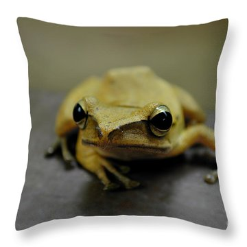 Throw Pillow featuring the photograph Little Frog by Michelle Meenawong